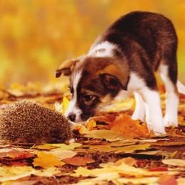 pes a ježek